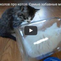 Смешные видео про кошек - ржачные, прикольные, веселые, забавные