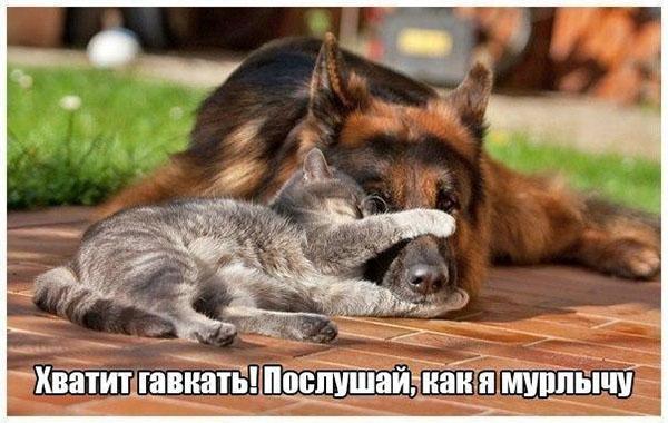 Смешные картинки животных с надписями до слез - смотреть онлайн, 2017 1