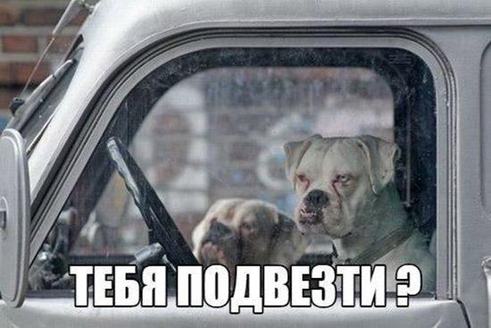 Смешные картинки животных с надписями до слез - смотреть онлайн, 2017 11