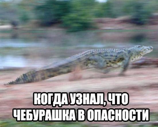Смешные картинки животных с надписями до слез - смотреть онлайн, 2017 20