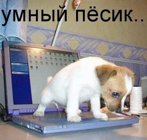 Смешные картинки животных с надписями до слез - смотреть онлайн, 2017 8
