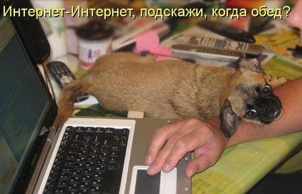 Смешные картинки животных с надписями до слез - смотреть онлайн, 2017 9
