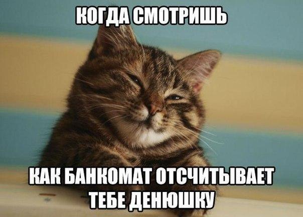 Смешные картинки котов с надписями - смотреть бесплатно 10