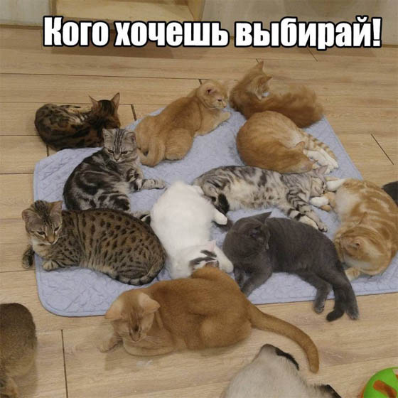 Смешные картинки котов с надписями - смотреть бесплатно 13