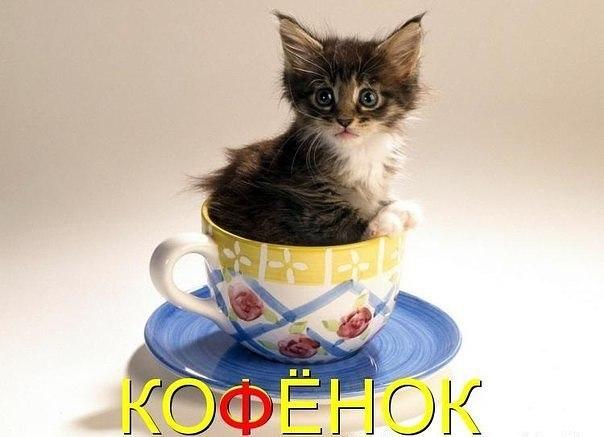 Смешные картинки котов с надписями - смотреть бесплатно 14