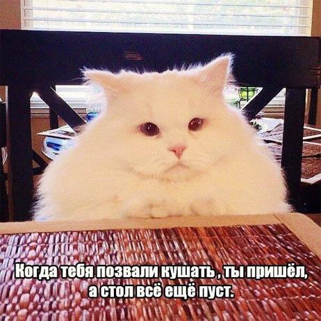 Смешные картинки котов с надписями - смотреть бесплатно 2