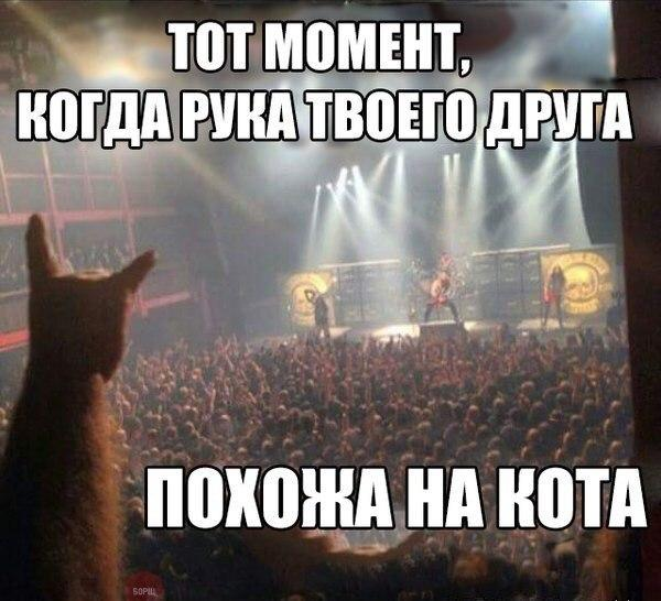 Смешные картинки котов с надписями - смотреть бесплатно 6