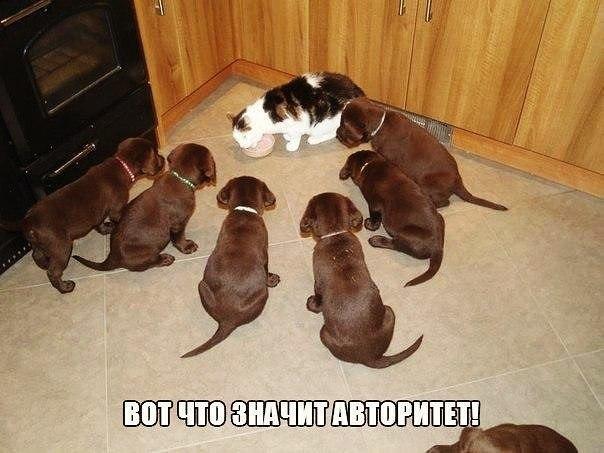 Смешные картинки котов с надписями - смотреть бесплатно 7