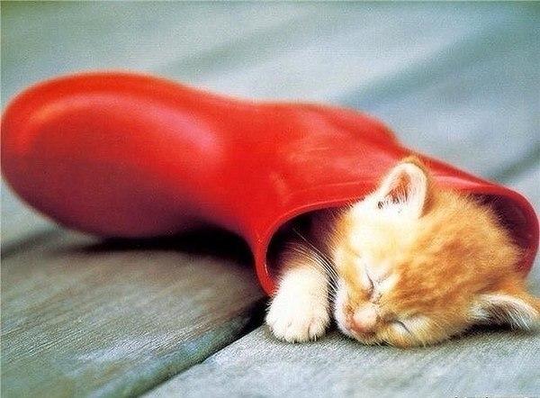 Смешные картинки котов с надписями - смотреть бесплатно 8