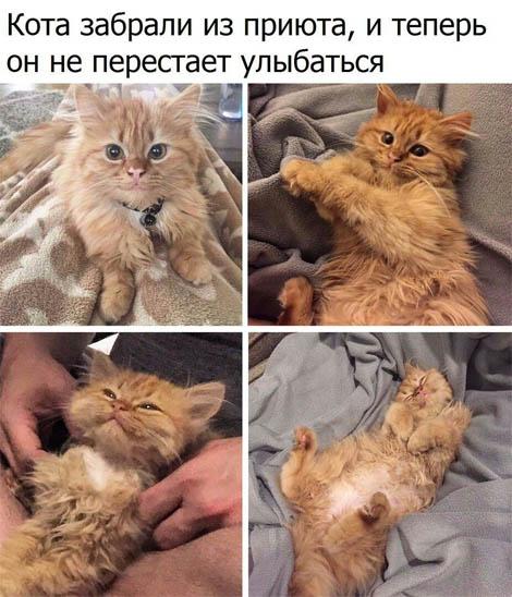 Смешные картинки с животными с надписями - смотреть бесплатно 11