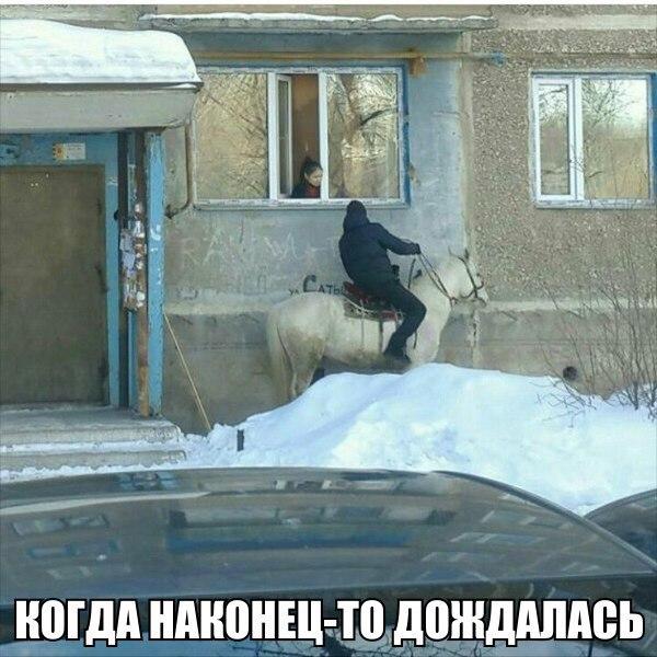 Смешные картинки с животными с надписями - смотреть бесплатно 14