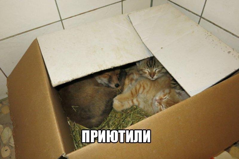 Смешные картинки с животными с надписями - смотреть бесплатно 15
