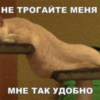 Смешные картинки с животными с надписями - смотреть бесплатно 2