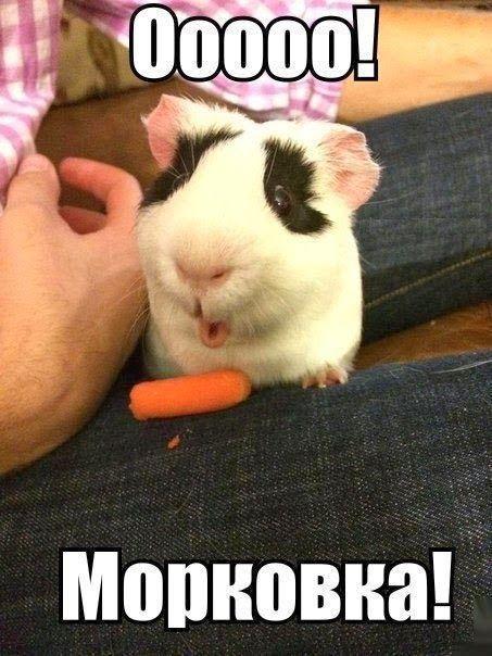 Смешные картинки с животными с надписями - смотреть бесплатно 3