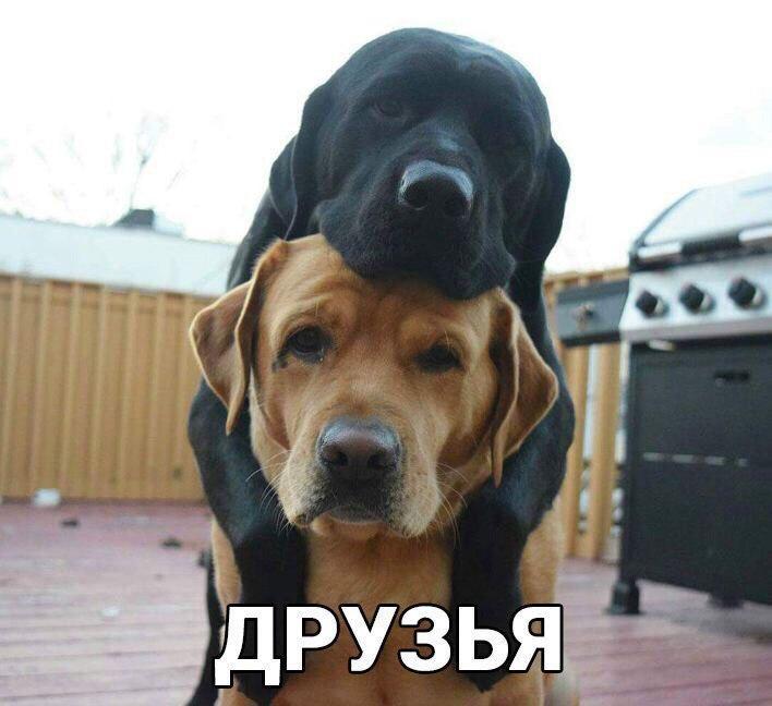 Смешные картинки с животными с надписями - смотреть бесплатно 9