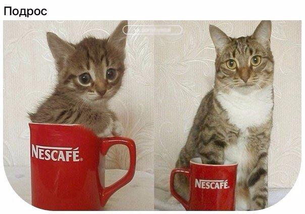 Смешные картинки с надписями до слез - смотреть бесплатно, онлайн 13