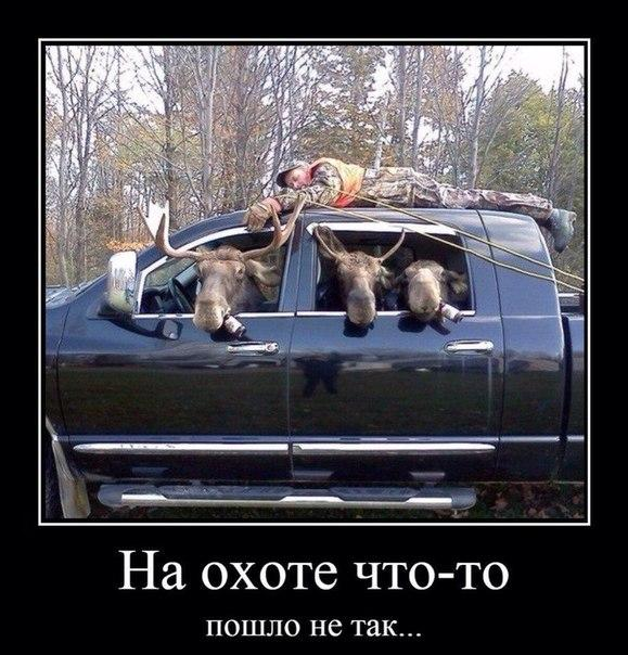 Смешные картинки с надписями про животных - смотреть онлайн 1