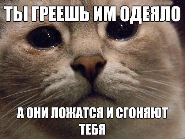 Смешные картинки с надписями про животных - смотреть онлайн 10
