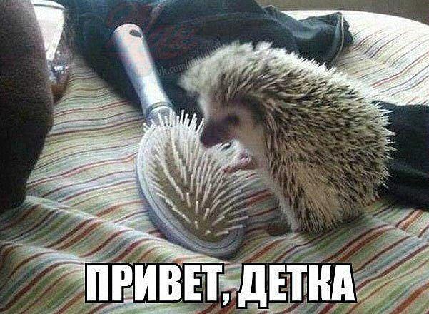 Смешные картинки с надписями про животных - смотреть онлайн 11