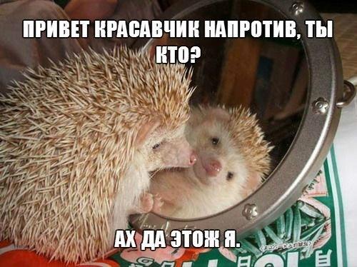 Смешные картинки с надписями про животных - смотреть онлайн 14