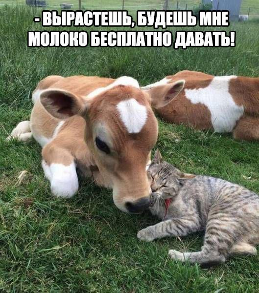 Смешные картинки с надписями про животных - смотреть онлайн 15
