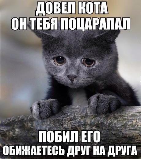 Смешные картинки с надписями про животных - смотреть онлайн 16