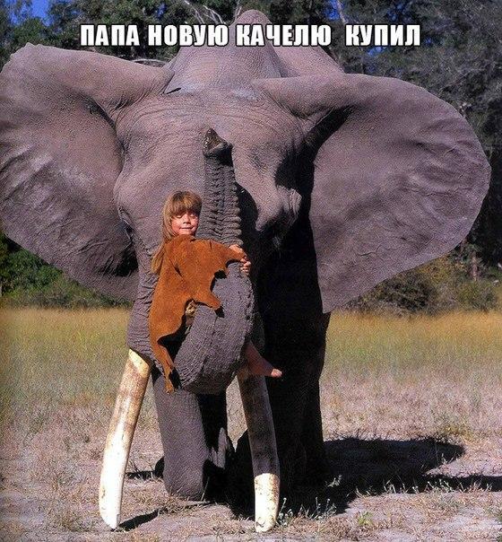Смешные картинки с надписями про животных - смотреть онлайн 2