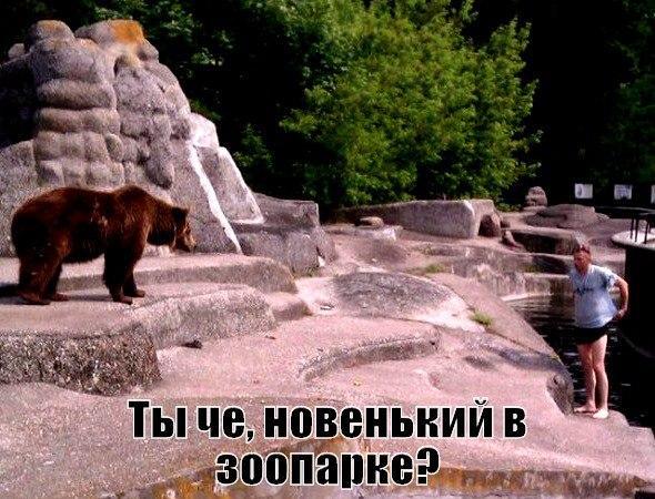 Смешные картинки с надписями про животных - смотреть онлайн 3