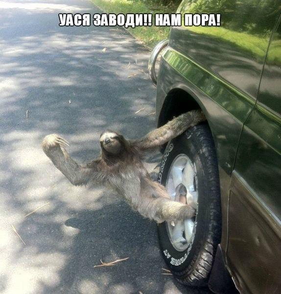 Смешные картинки с надписями про животных - смотреть онлайн 4