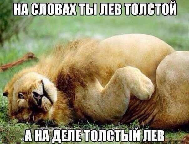Смешные картинки с надписями про животных - смотреть онлайн 5