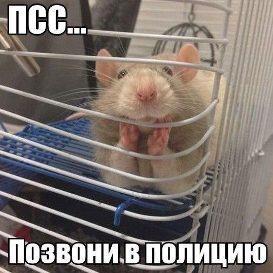 Смешные картинки с надписями про животных - смотреть онлайн 6