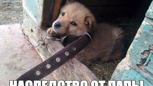 Смешные картинки с надписями про животных - смотреть онлайн 7