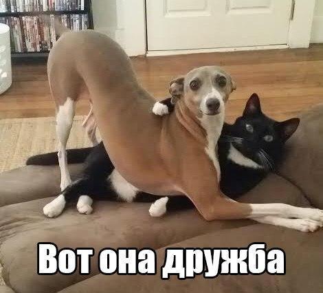 Смешные картинки с надписями про животных - смотреть онлайн 8