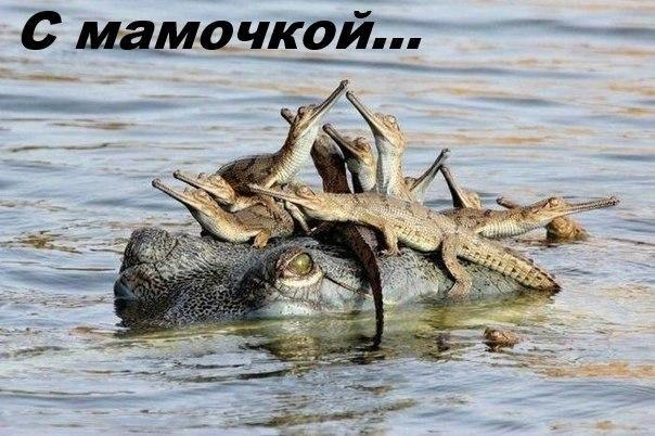 Смешные картинки с надписями про животных - смотреть онлайн 9