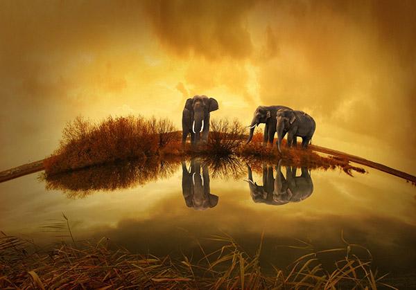 Смотреть картинки про животных бесплатно - красивые, удивительные 1