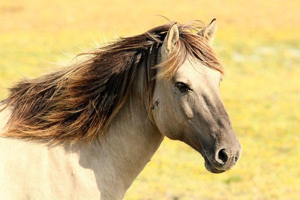Смотреть картинки про животных бесплатно - красивые, удивительные 12