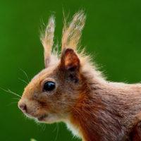 Смотреть картинки про животных бесплатно - красивые, удивительные 2