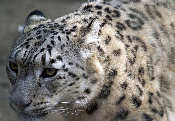 Смотреть картинки про животных бесплатно - красивые, удивительные 3