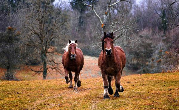 Смотреть картинки про животных бесплатно - красивые, удивительные 9