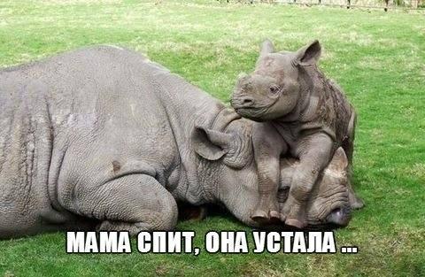Смотреть смешные картинки про животных бесплатно, до слез 1