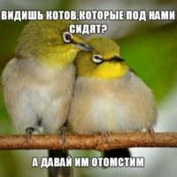 Смотреть смешные картинки про животных бесплатно, до слез 12
