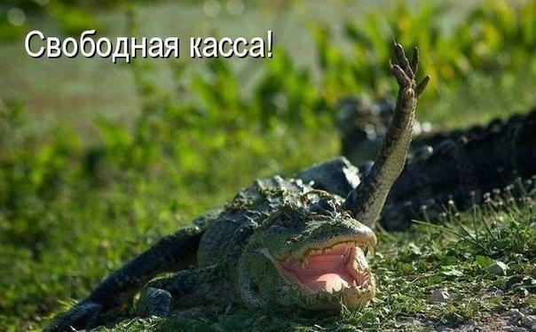 Смотреть смешные картинки про животных бесплатно, до слез 5