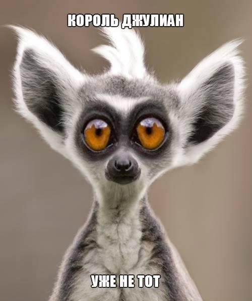 Смотреть смешные картинки про животных бесплатно, до слез 7