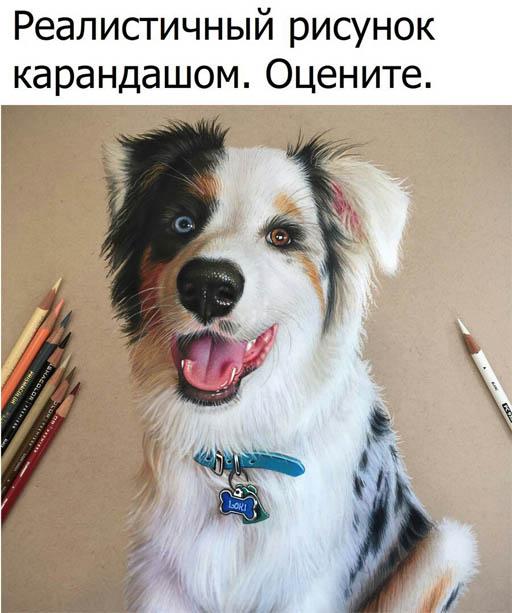 Смотреть смешные картинки про животных бесплатно, до слез 9