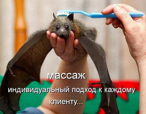 Смотреть смешные фото про животных до слез, с надписями 1