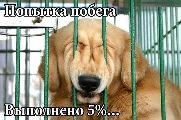 Смотреть смешные фото про животных до слез, с надписями 18