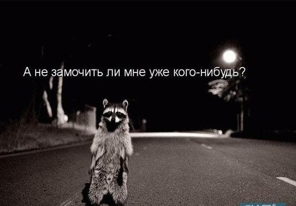 Смотреть смешные фото про животных до слез, с надписями 5