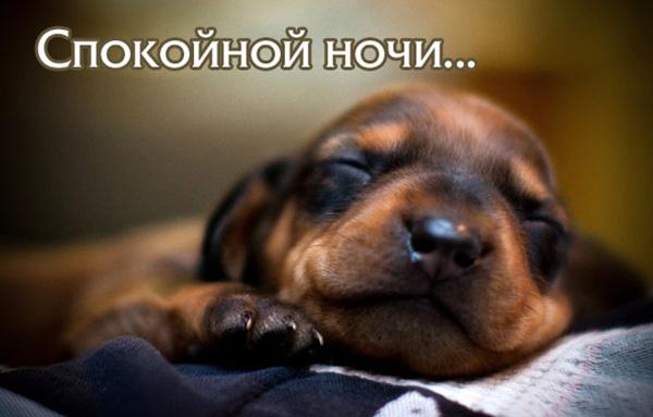 Спокойной ночи картинки с надписями - красивые, прикольные, крутые 4