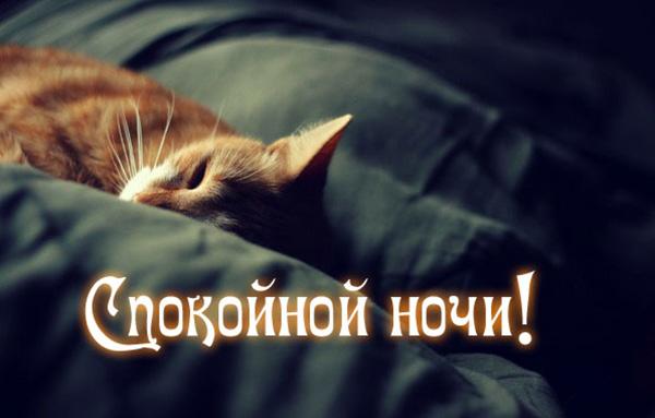 Спокойной ночи картинки с надписями - красивые, прикольные, крутые 5