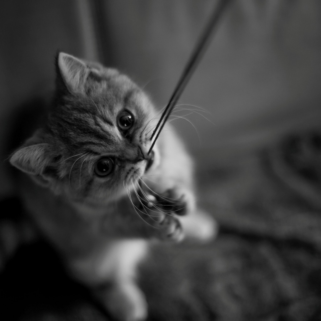 Черно-белые картинки котов, красивые коты - фото черно-белые 4